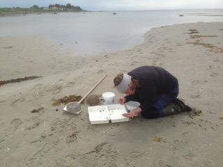 Person samlar in snäckor på strand för analys av TBT.