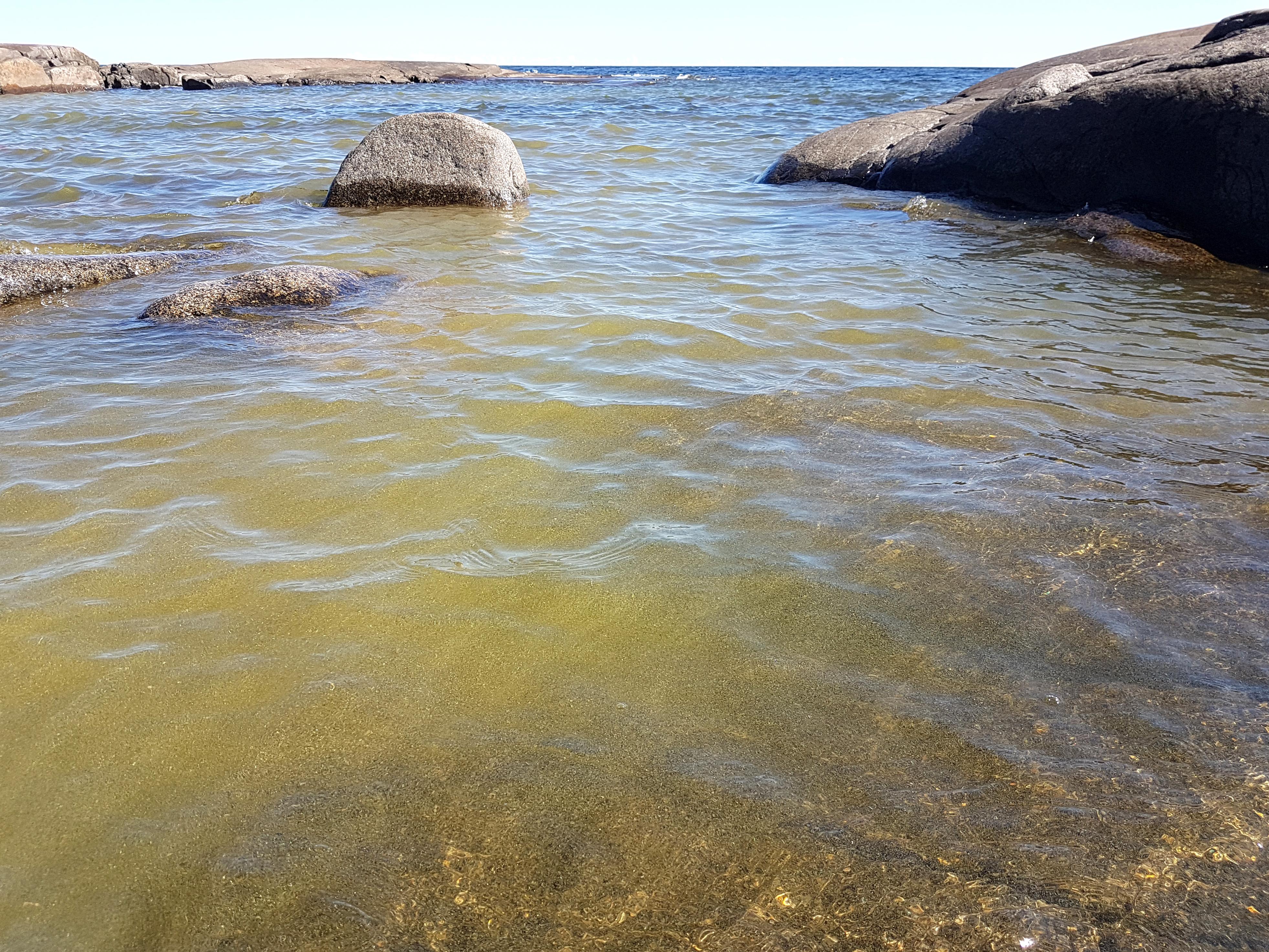 Algblomning vid strand