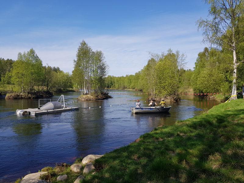 Smolthjul i Åbyälven. Foto.