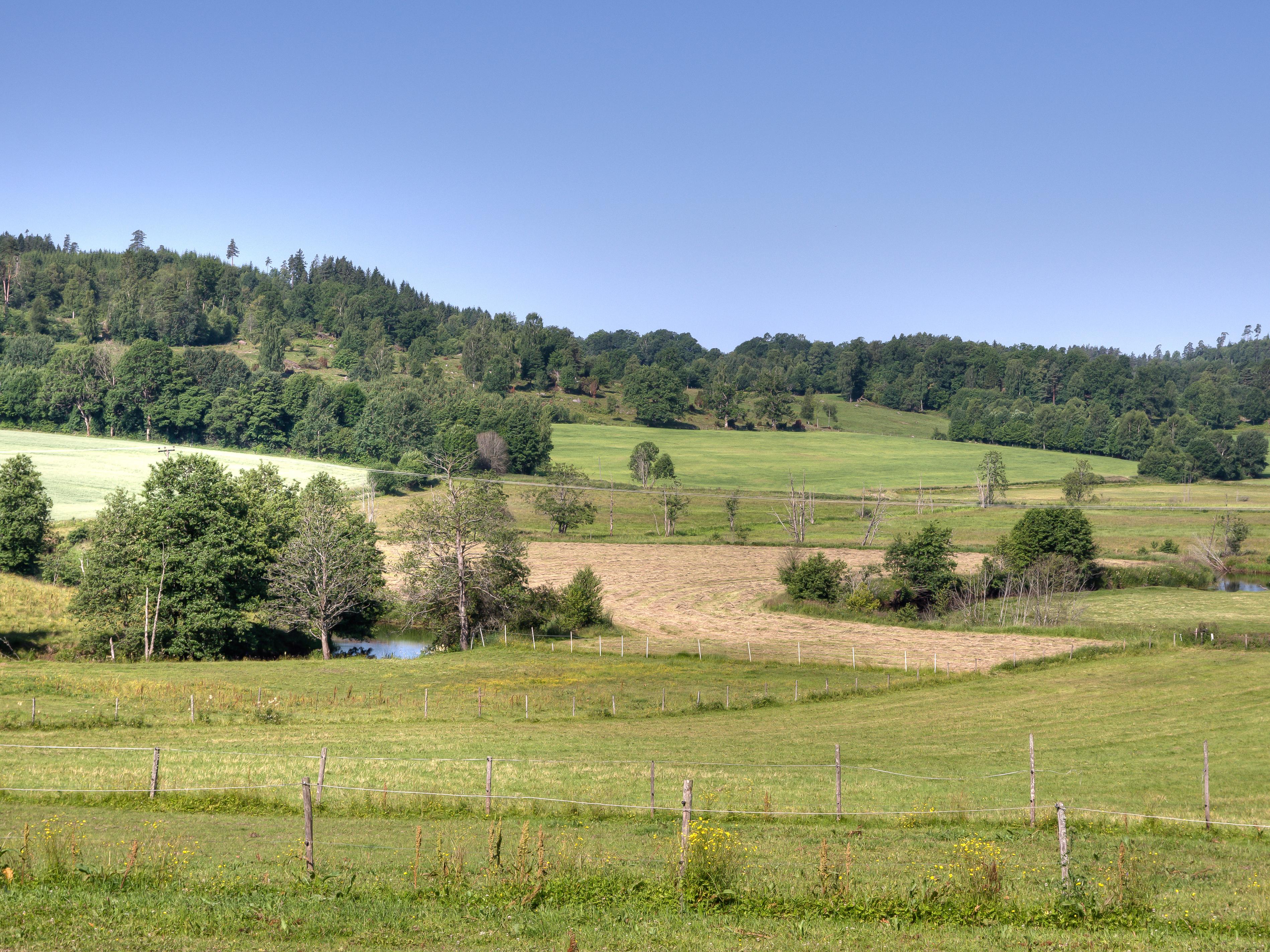 jordbruksmiljö om sommaren