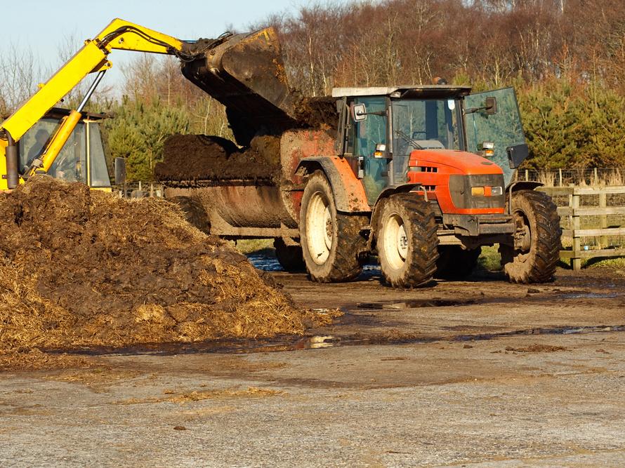 lastning av gödsel på traktorvagn