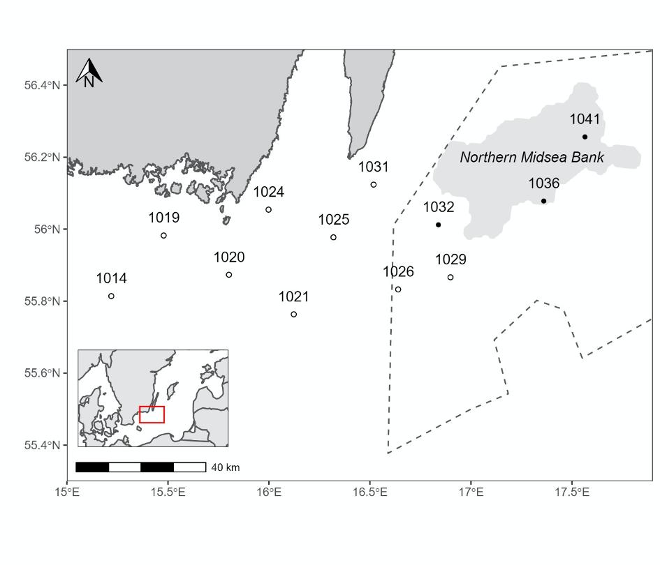 Karta Östersjöpopulation tumlare