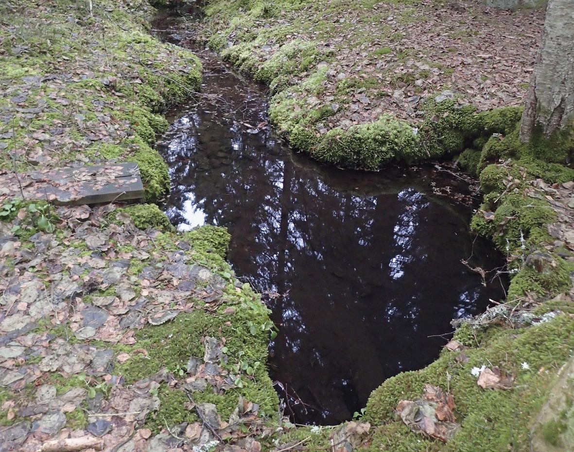Naturlig och oskadad källa i skogen.
