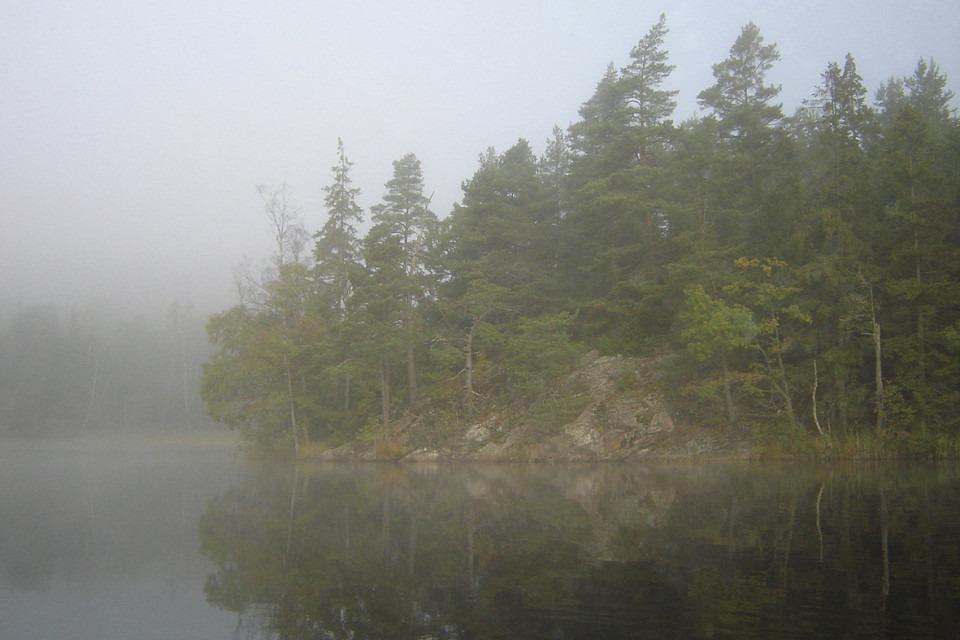 dimma ligger över skogssjö