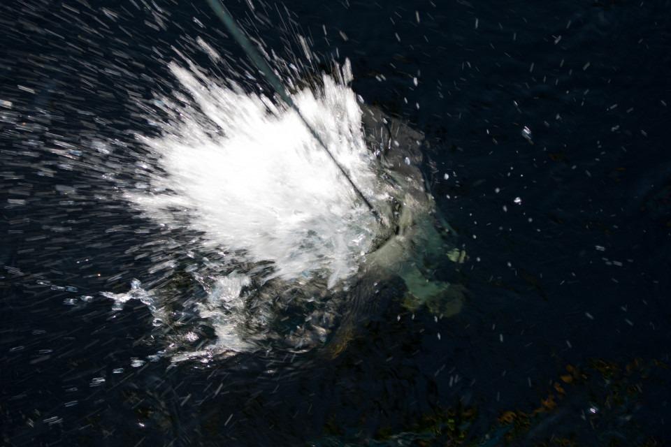 vattenproftagning från fartyg med vattenhämtare som bryter vattenytan