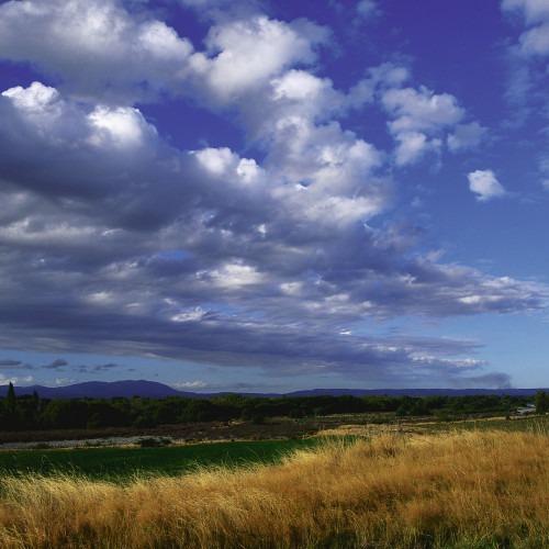 Moln på blå himmel och gulnat gräs på marken