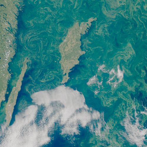 Satellitbild över algblomning
