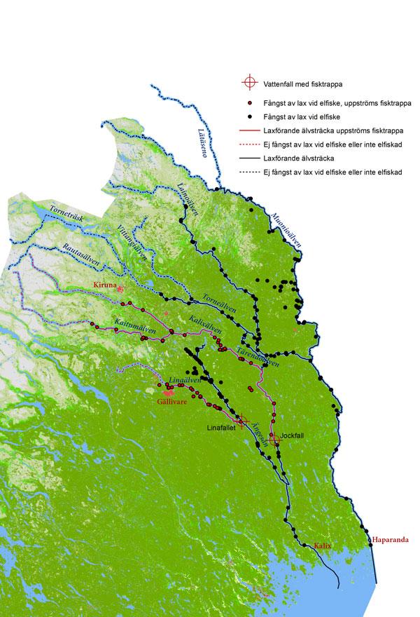 Karta som visar elfiskestationer i Torne- och Kalixälven med laxförekomst under 2000-2019