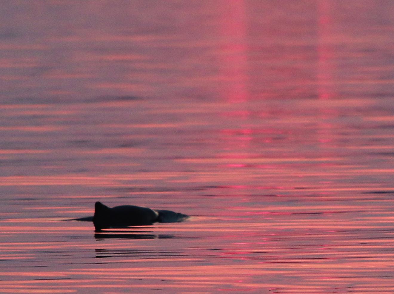 Tumlare i kvällsljus