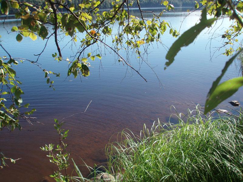 Vy av brun sjö. Foto.